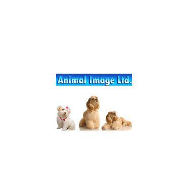 Animal Image logo