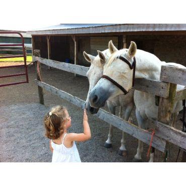 Shaye - The horse whisperer