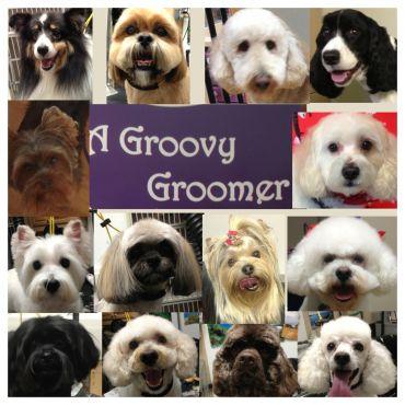 A Groovy Groomer