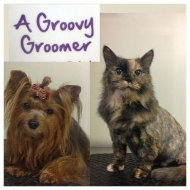 A Groovy Groomer logo