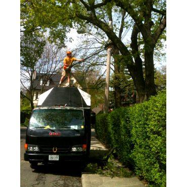 Using the Wagon to my Arboristic avantag