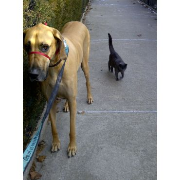 K9Recess for Samson and the cat!
