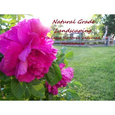 Natural Grade Landscaping PROFILE.logo