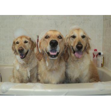 Splish Splash Dog Grooming Salon