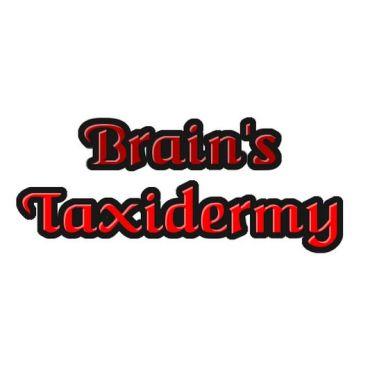 Brain's Taxidermy logo