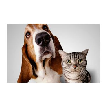 Services For Both Cats and Dogs