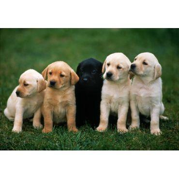 Puppy and Pot Break Visits
