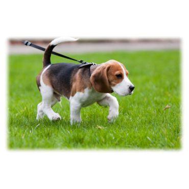 Provide Dog Walking Services
