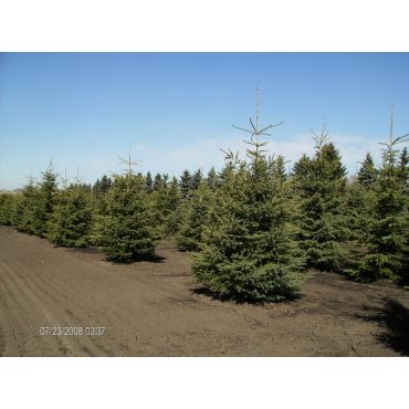 Available Trees