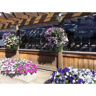 Greenehouse plants at Sola's Restaurant