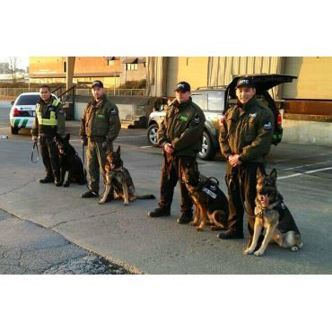 Security K9 Teams