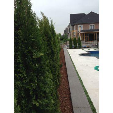 Emerald Cedars