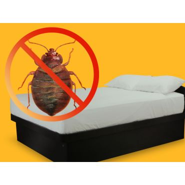 Anti- Bed Bug Bed