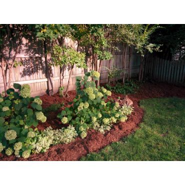 Planting and Mulch Installation