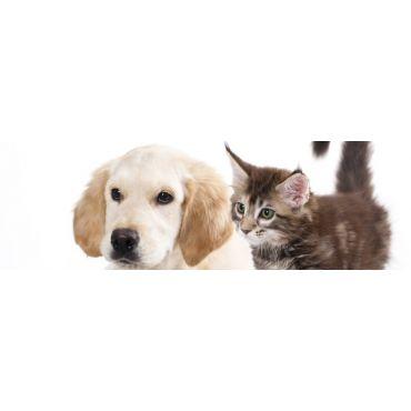 Ohana Feed & Pet Supply PROFILE.logo