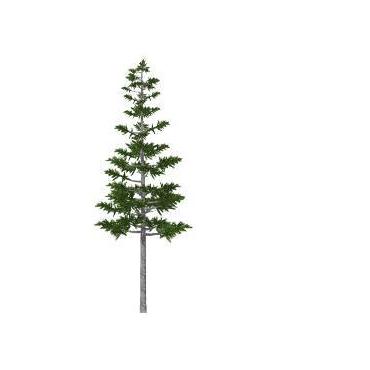Tall Pine Management PROFILE.logo