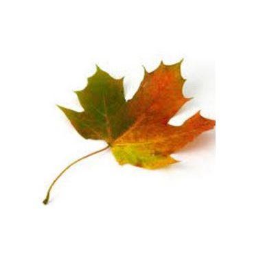 New Leaf Training logo