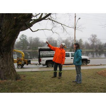 Tree Consultation