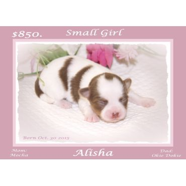 Girl Puppy For Sale
