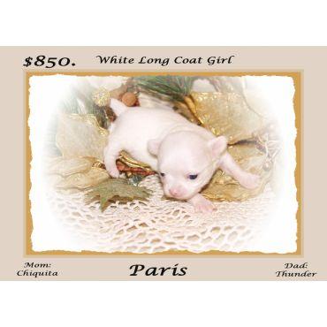 White Long Coat Girl For Sale