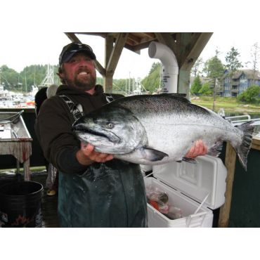 Chinook Salmon, yes its a Tyee!
