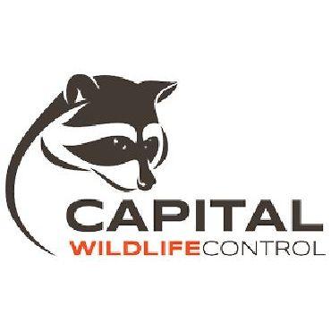 Capital Wildlife Control logo