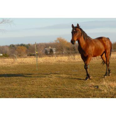 Pour une santé optimale de votre cheval