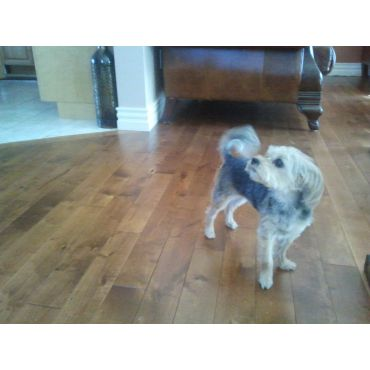 pets love our wood floor finishes