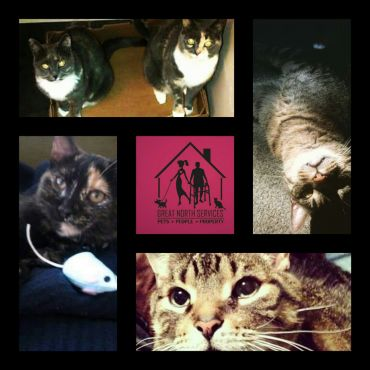 Call us today for your cat care needs