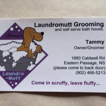 Laundromutt dog grooming and self serve bath house in halifax ns gallery solutioingenieria Image collections