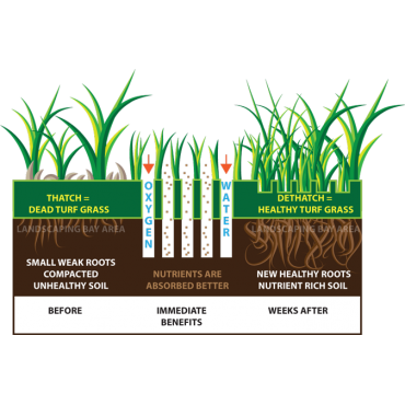 Benefits of De-Thatching/ Core Aeration
