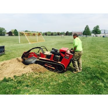 Stump Grinding in the City of Hamilton