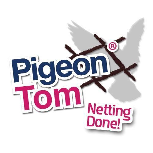Pigeon Tom