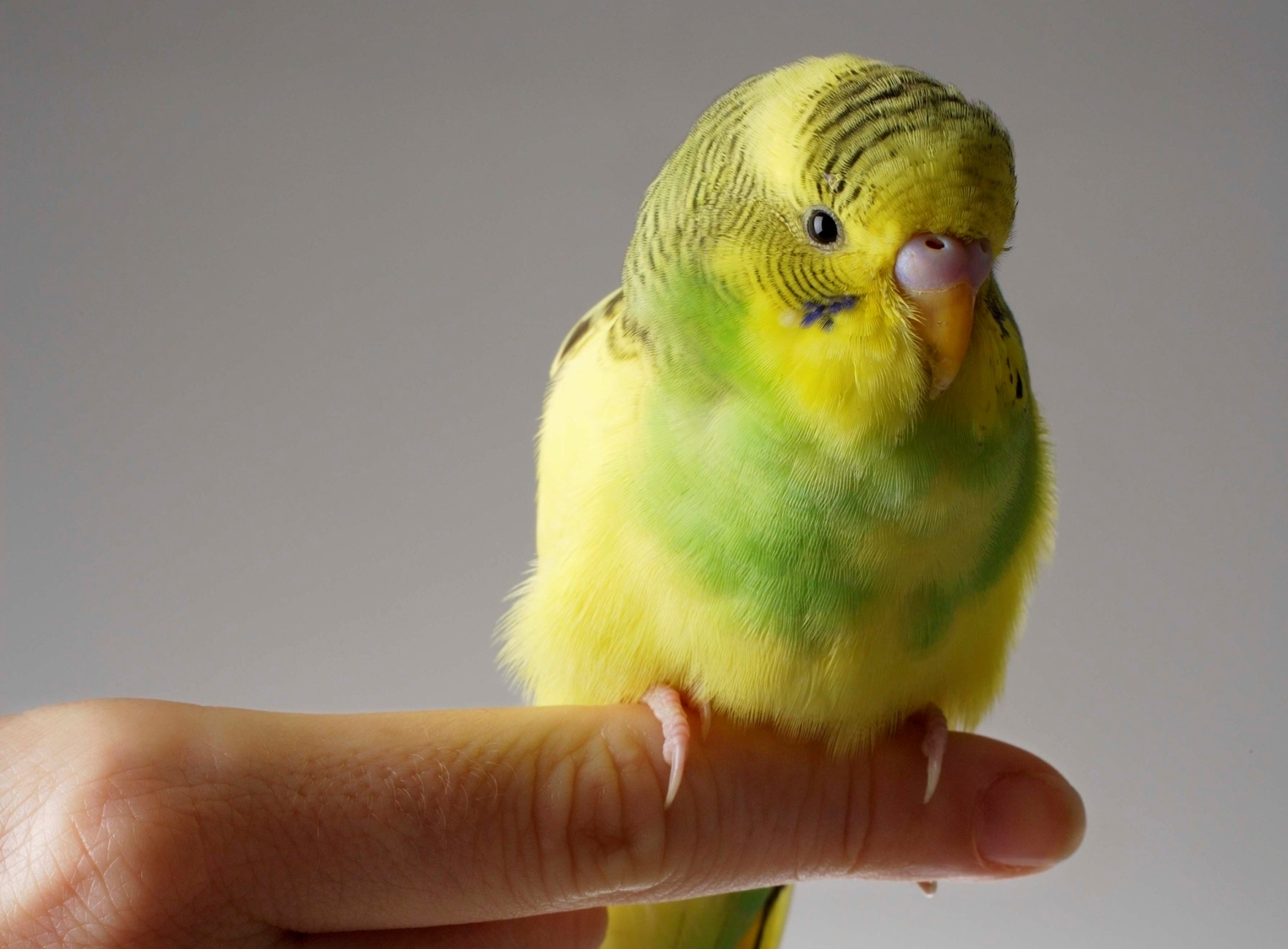 How Birds Express Their Feelings Pets