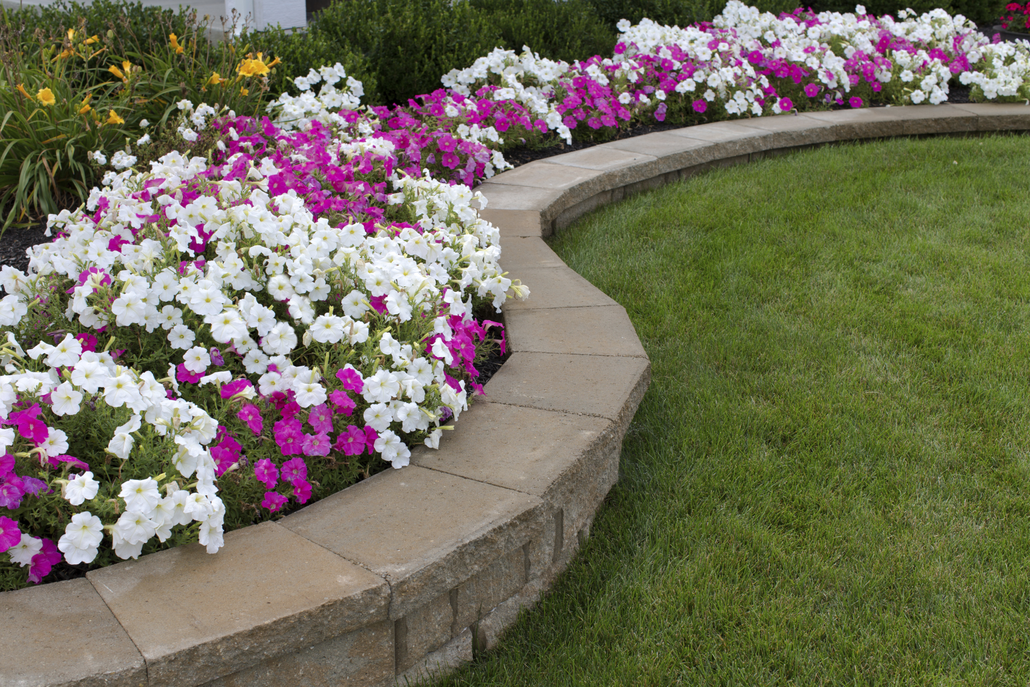 Planting Ideas for Along the Side of the Garage | Home Guides | SF on backyard design zone 6, garden design zone 8, rock garden plants zone 6, garden design zone 4, rain garden plants zone 6, garden design zone 9,