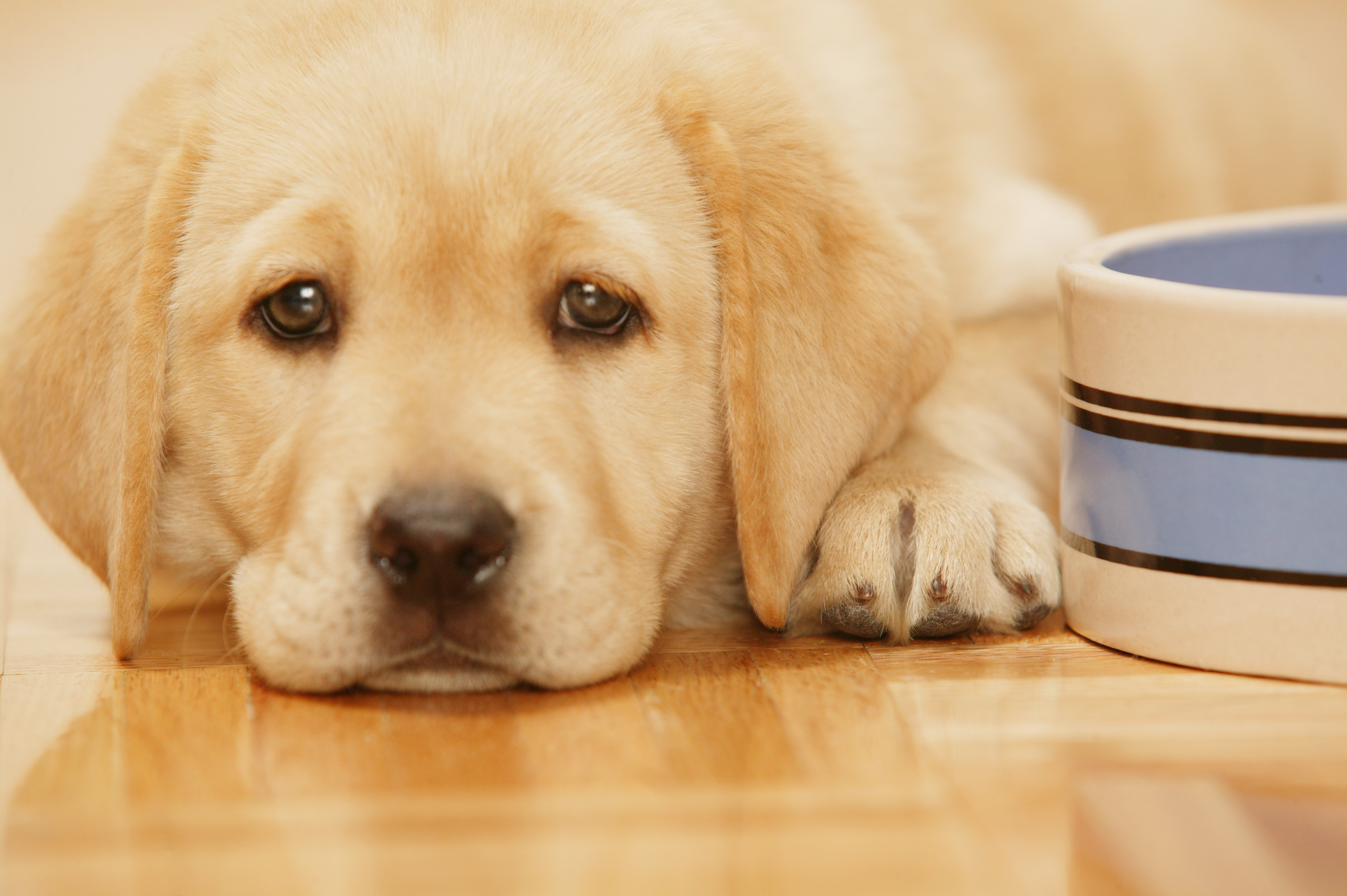 When Can Puppies Eat Dry Food