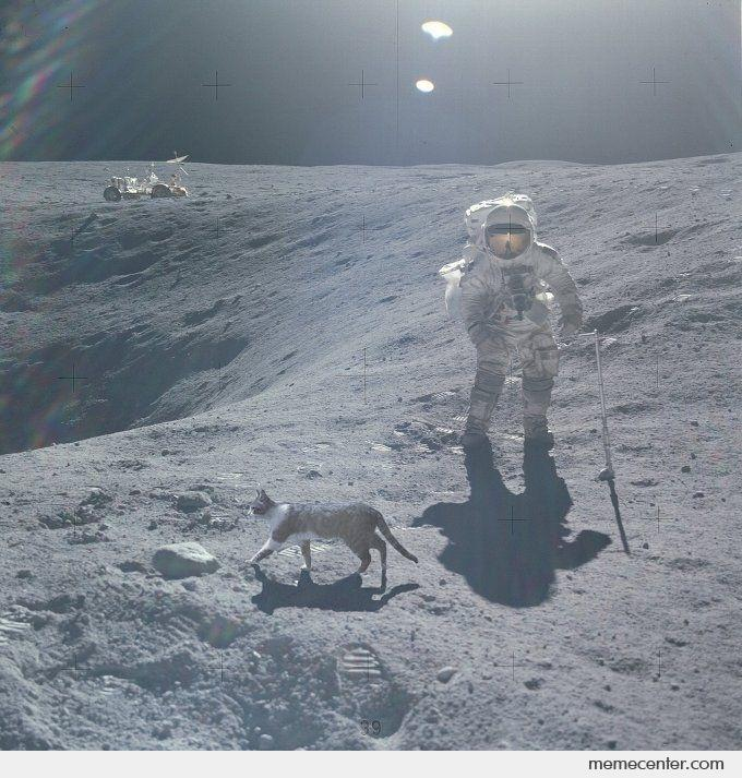 https://s3.amazonaws.com/uploads.bmxmuseum.com/user-images/74614/cat-on-the-moon_o_84665e3dd506ce.jpg