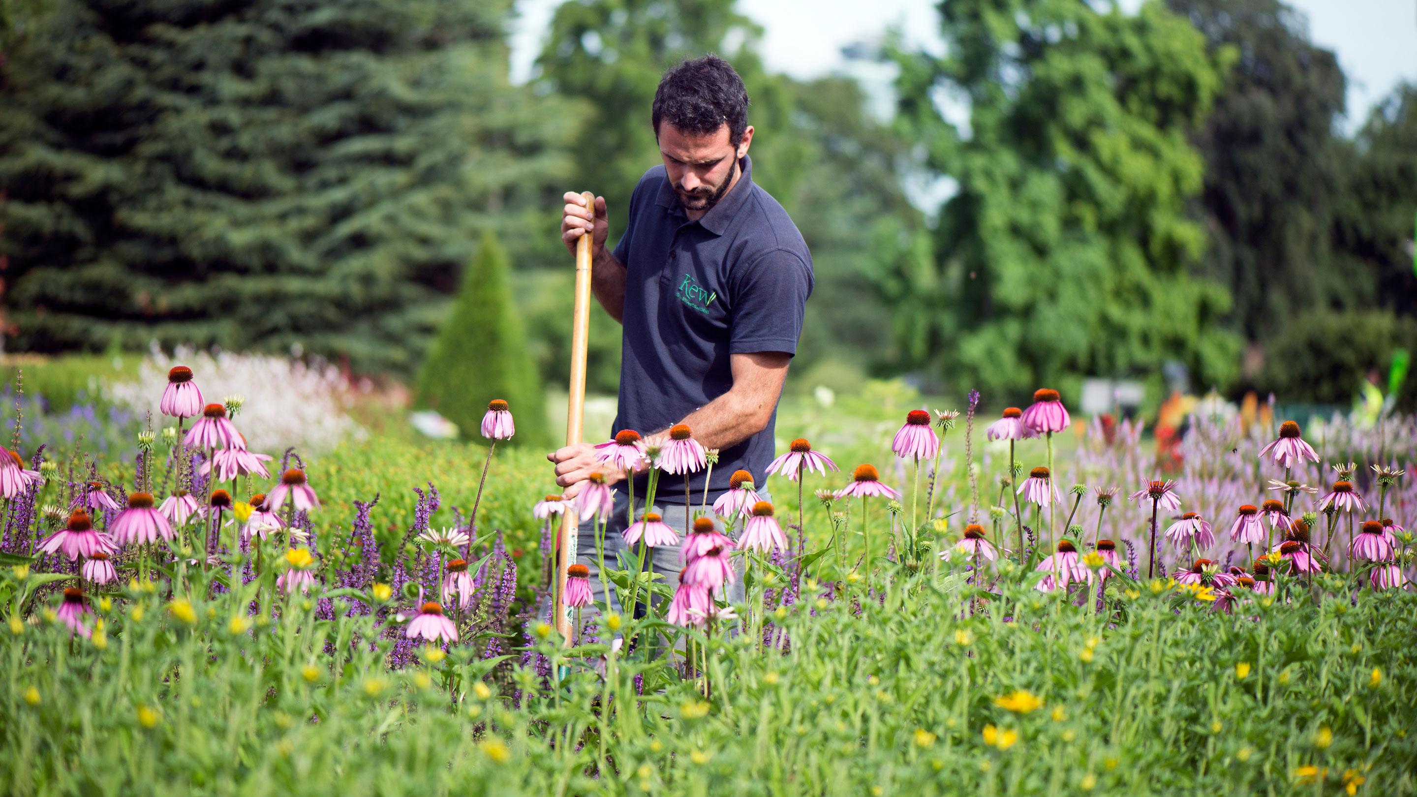Amenity Horticulturists
