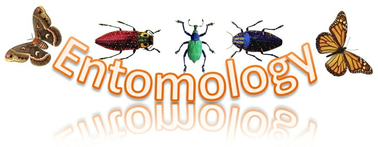 Entomology