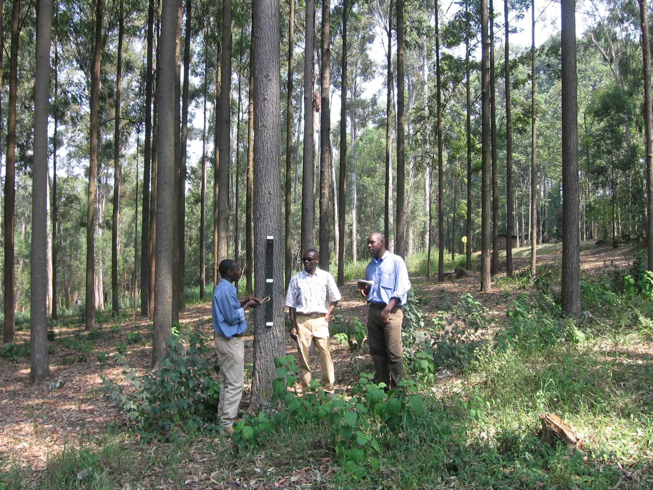 M.Sc. Agroforestry