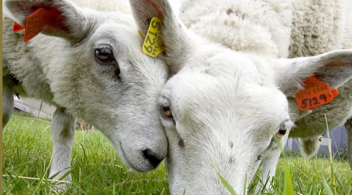 M.Sc. Animal Breeding & Genetics