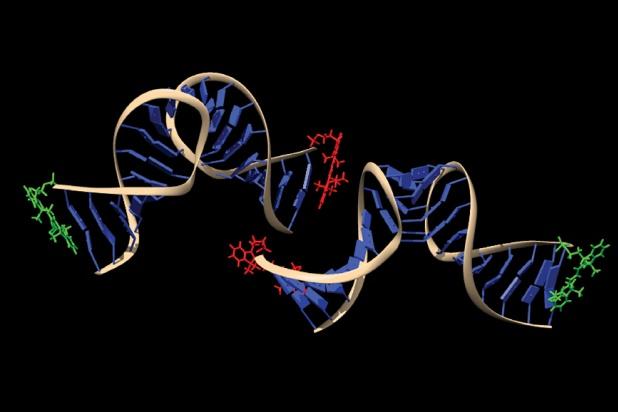 Molecular Biophysicist