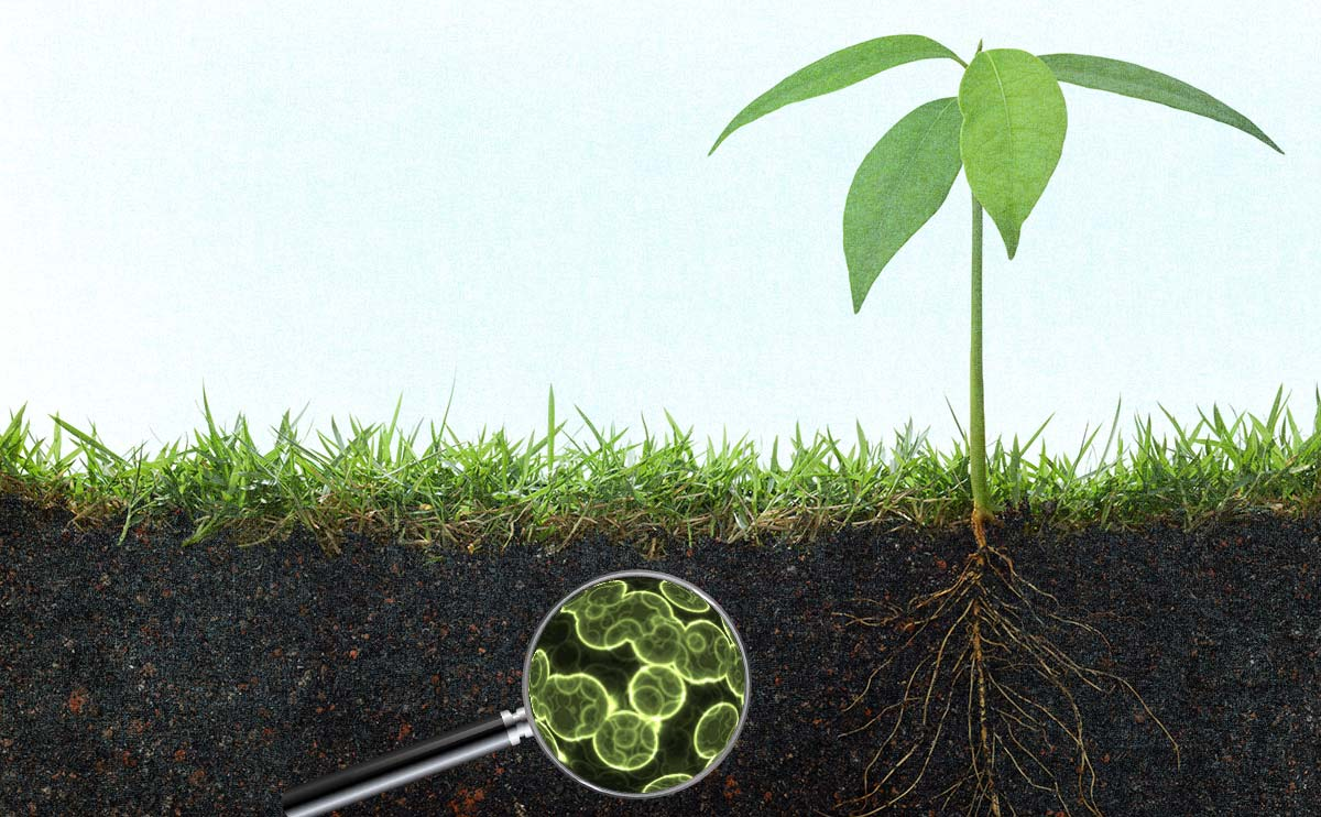 Natural antibiotic-resistant bacteria found in soil