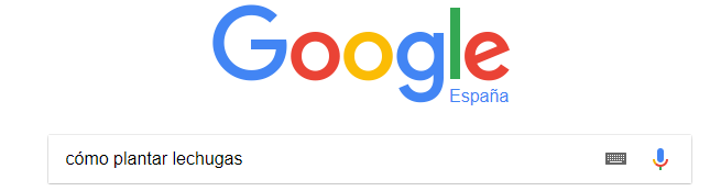 """Ganar dinero con un blog - usuario escribe en Google """"cómo plantar lechugas"""""""