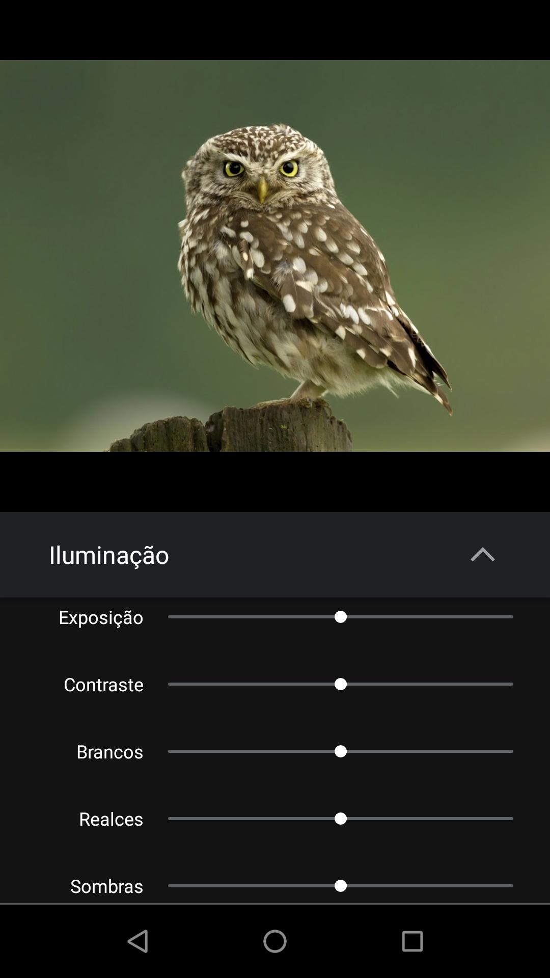 Google Fotos_imagem com as ferramentas de edição detalhada do Google Fotos