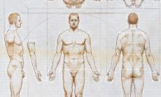Anatomy Master Class Week 8