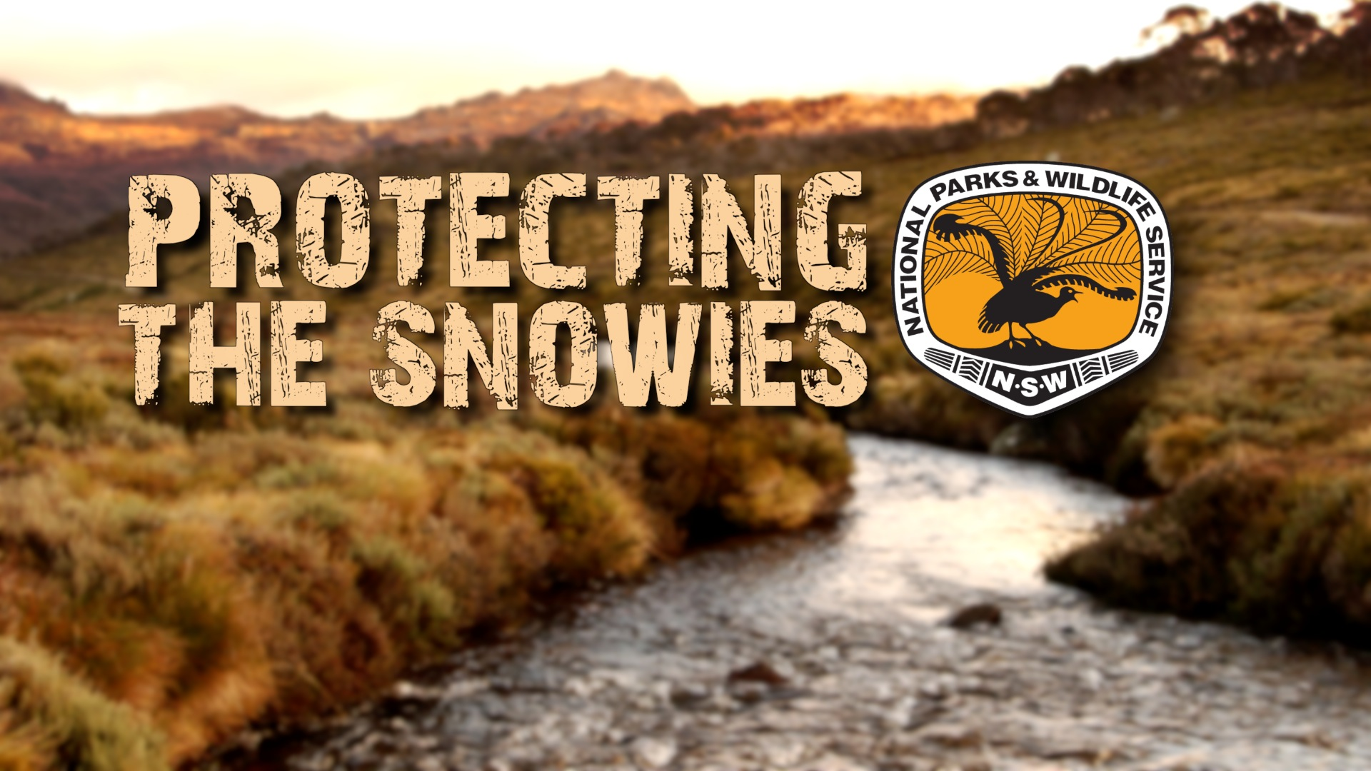 Protecting the Snowies