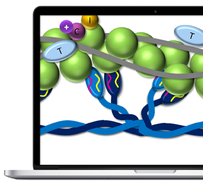 Actin and Myosin on Half Laptop Screen