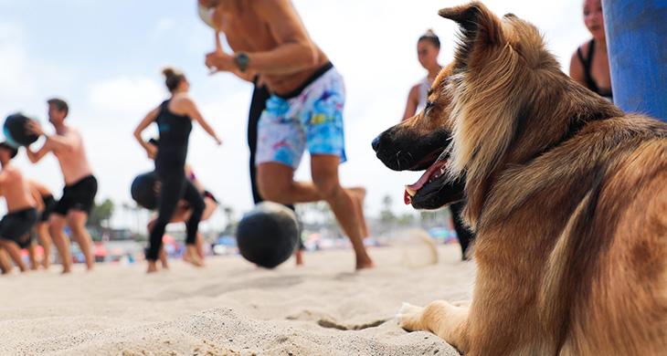 Santa Monica Beach Workouts CrossFit BeachFit