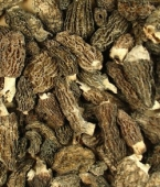 Morel Mushrooms | OliveNation